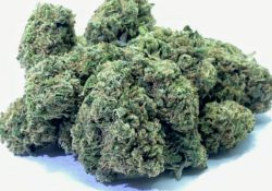 select co op dc alien rock candy weed photo