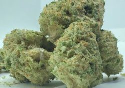 select co op dc papaya blue dream weed photo