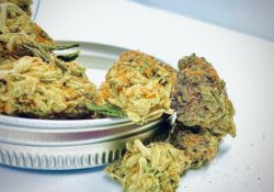 athenas gifts dc blue dream weed photo
