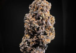 exotic blooms dc gelato gas weed photo
