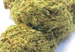select co-op dc lemon sorbet weed photo