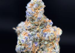 exotic blooms dc octane mint sorbet weed photo