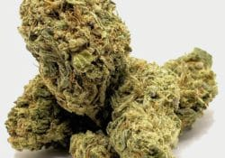 select co op dc acapulco gold weed photo