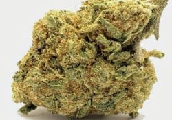 select co op dc destroyer weed photo