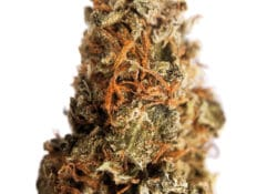 District conect dc kings kush og weed photo