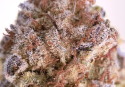 district connect dc skittles cake weed photo
