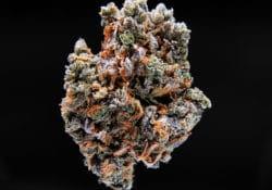 wxotic blooms dc black diamond weed photo