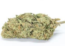 green kings dc runtz weed photo