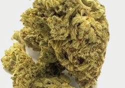 select co op dc napoli pink weed photo