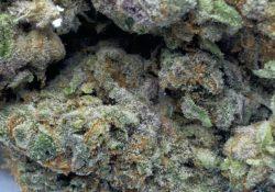 select co op dc cosmic crisp weed photo