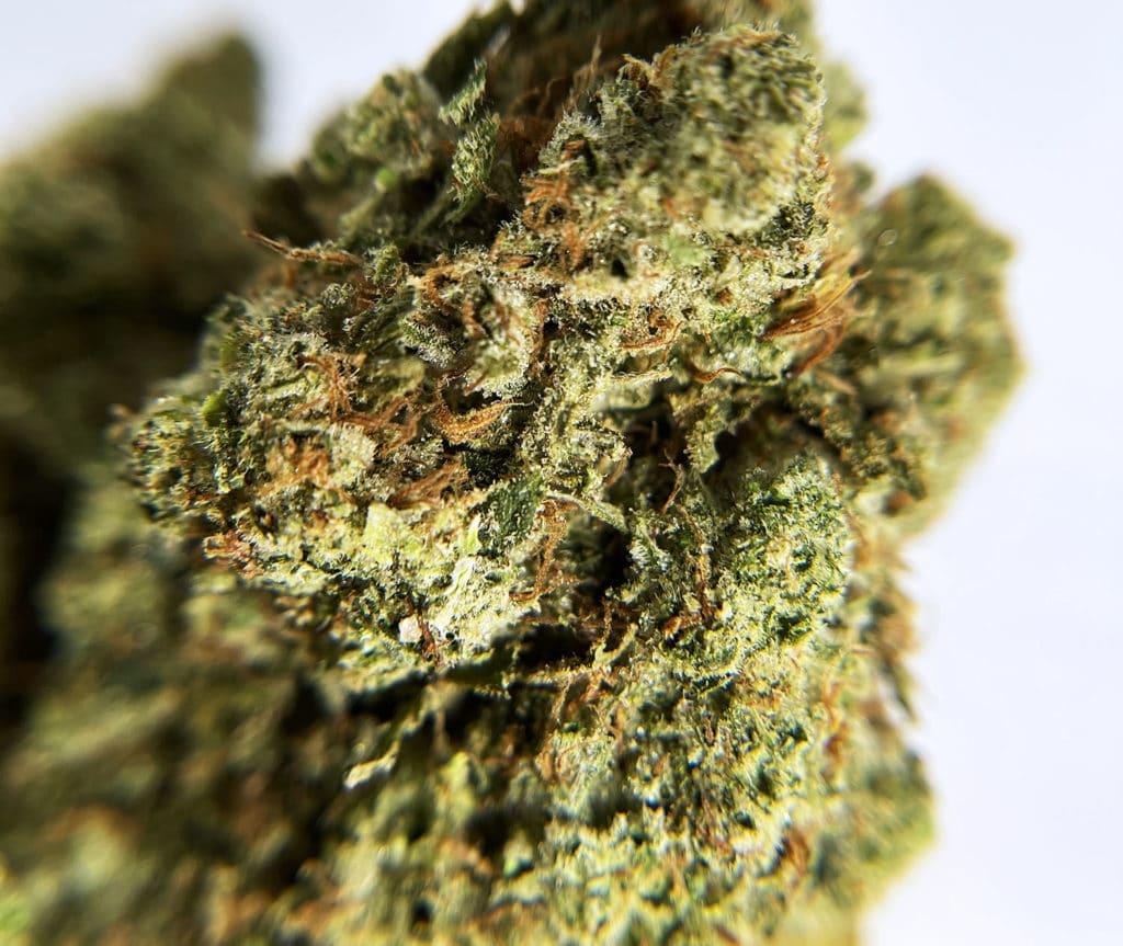 district connect dc lemon meringue weed photo