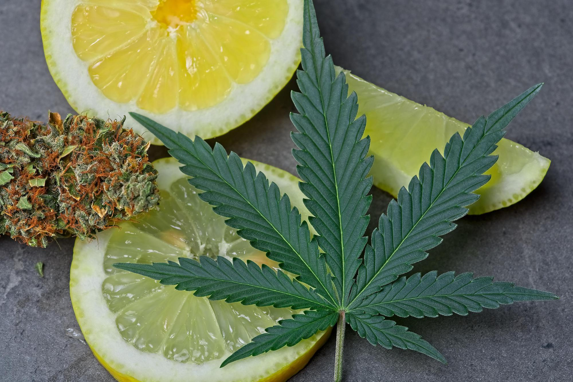 limonene terpene weed photo