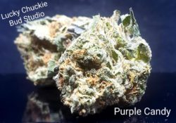 lucky chuckie dc purple candy weed photo