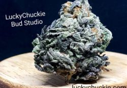 lucky chuckie dc white gold weed photo