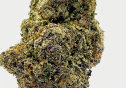 select co op dc fruity pebbles weed photo