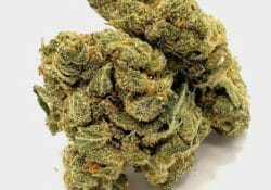 select co op dc super jack weed photo