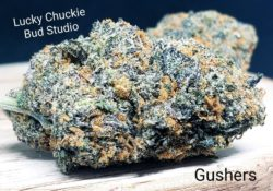 lucky chuckie dc gushers weed photo 5/2/21