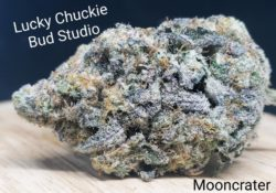 lucky chuckie dc mooncrater weed photo