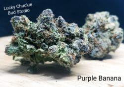 lucky chuckie purple banana weed photo