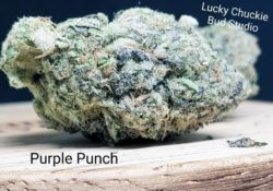 lucky chuckie dc purple punch weed photo