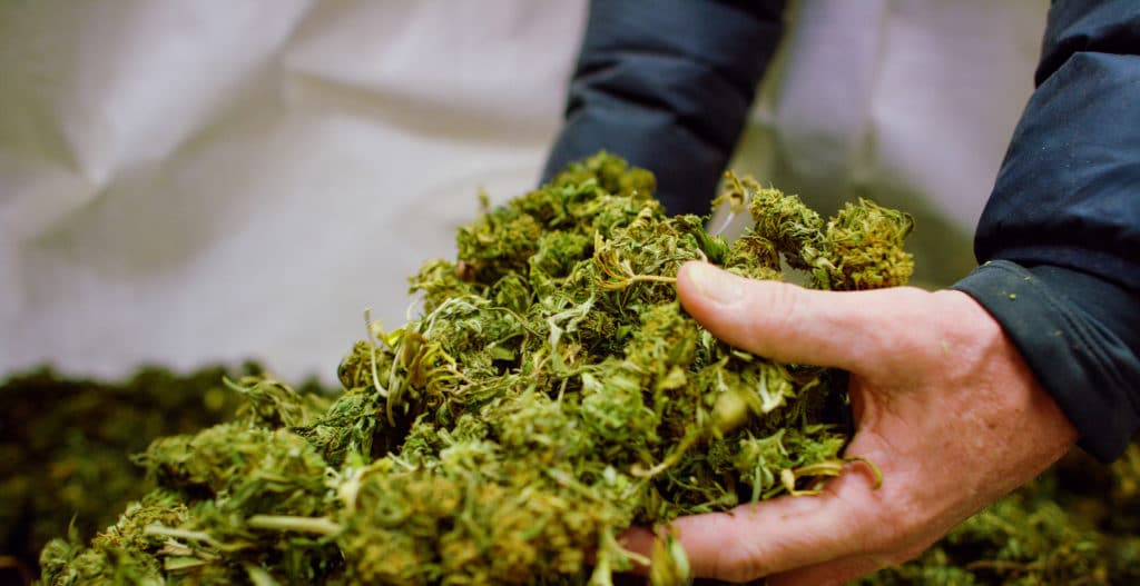 machine chopped manicure weed stock photo