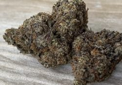 peace in the air black cherry gelato weed photo