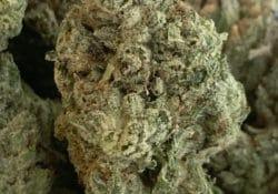 puff kings dc super glue weed photo