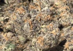 puff kings dc gushers weed photo