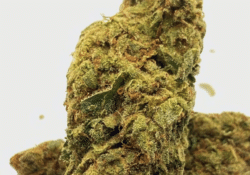 Sour Patch Kids Strain by Co Op