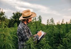 Virginia Legal Weed Field