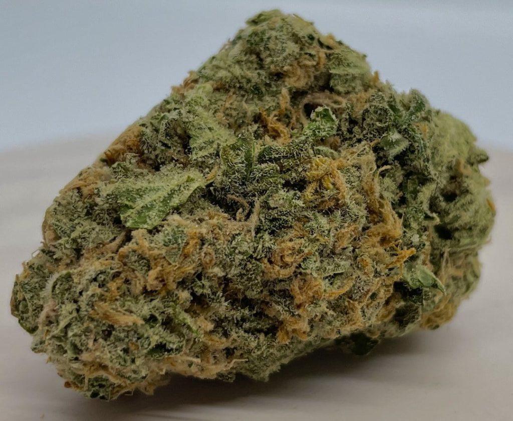 orange crush weed photo athenas gifts