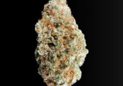 exotic blooms gg4 weed photo