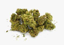 lemon mints select co-op weed stock photo