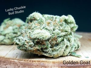golden goat weed photo lucky chuckie
