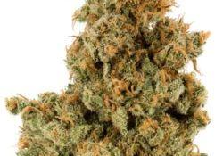 ak-49 weed photo select co-op