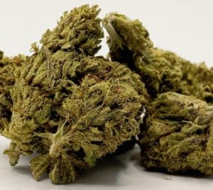 g13 weed photo select co-op