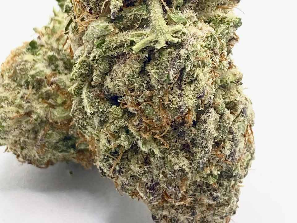 white gummy select co-op weed stock photo