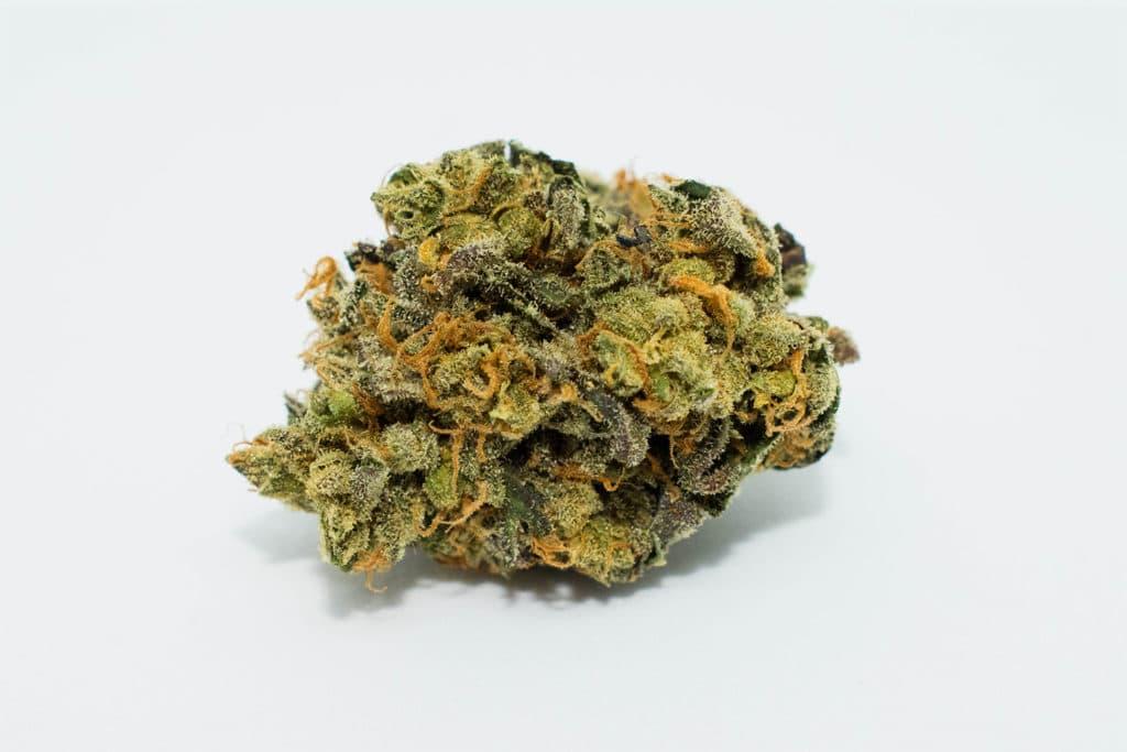 gmo cookies cannabis bud photo