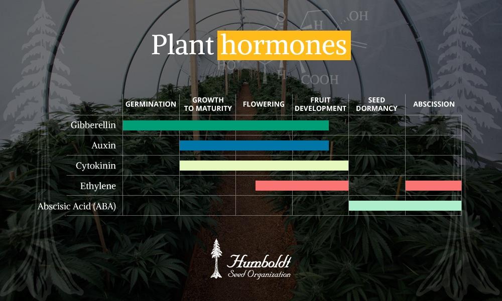humboldt seeds plant hormone chart